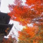 Japanese Autumn Landscapes
